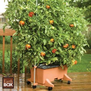 Container Gardening/Seed Starting